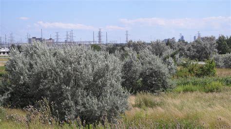 olive garden billings montana