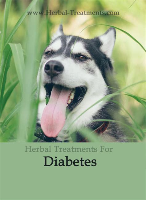 dog diabetes treatment natural diabetes in dogs caraf avnayt s herbal treatments