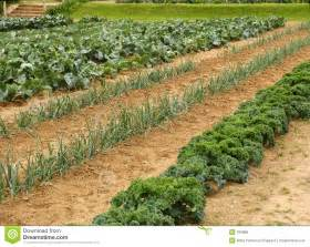 vegetable garden royalty free stock photos image 783988 hsclnk clipart kid