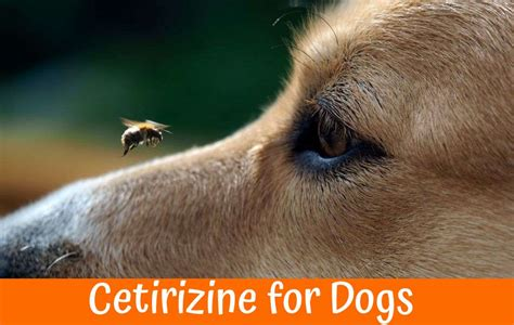 cetirizine for dogs best guide to purchase relaxer us bones