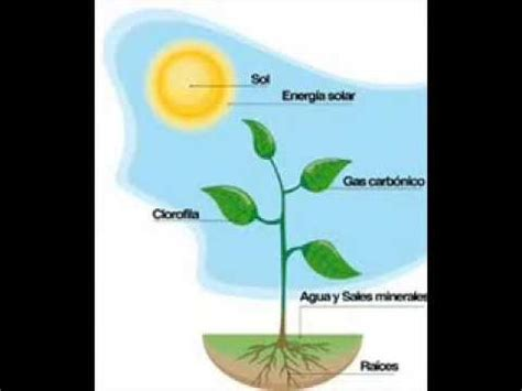 Plants That Don T Need Sunlight la fotosintesis youtube