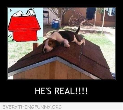 funny dog houses funny caption beagle sitting on dog house roof snoopy he s real click here