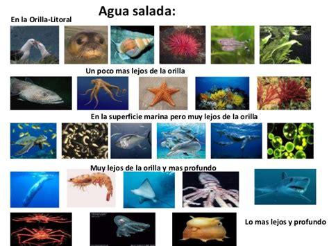 imagenes animales que viven en el agua animales que viven debajo del agua