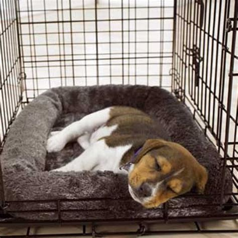 house breaking a puppy house breaking dogs 28 images 7 reasons you fail at housebreaking a puppy how to