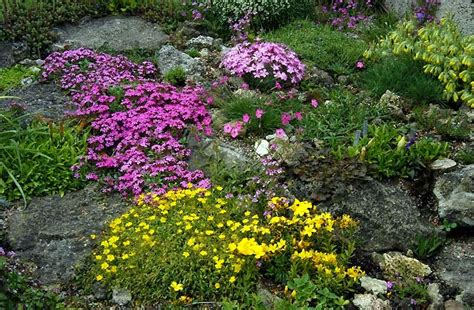 Plants For A Rock Garden Lizzie S Logic Plant Of The Week