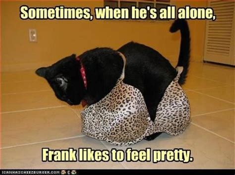 All Alone Meme - sometimes when he s all alone frank likes to feel pretty