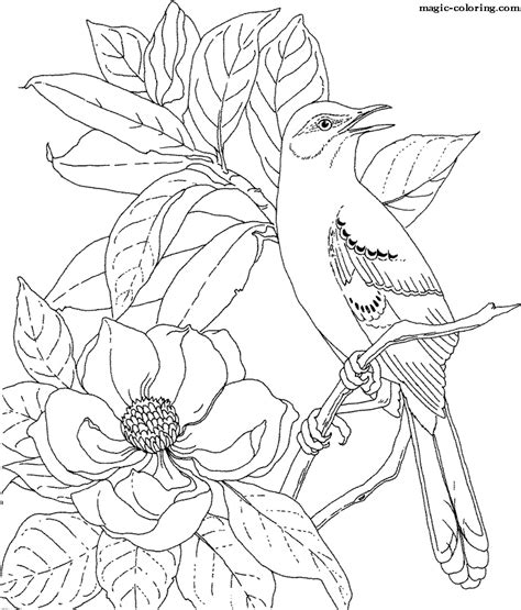 coloring book javascript magic coloring magnolia coloring pages