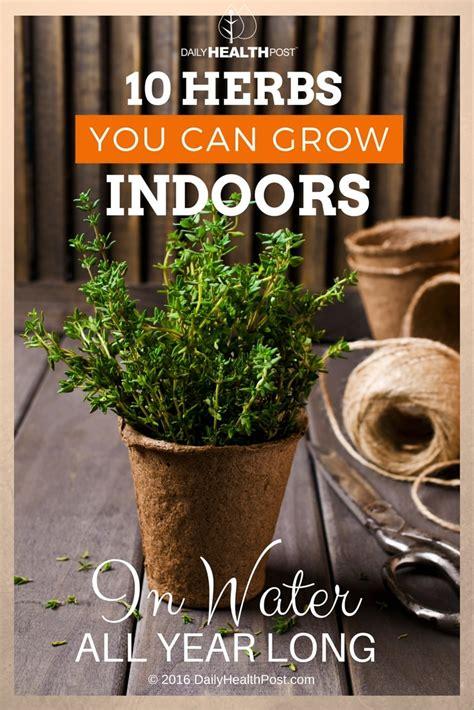 herbs indoors growing herbs indoors 10 varieties to grow in water all