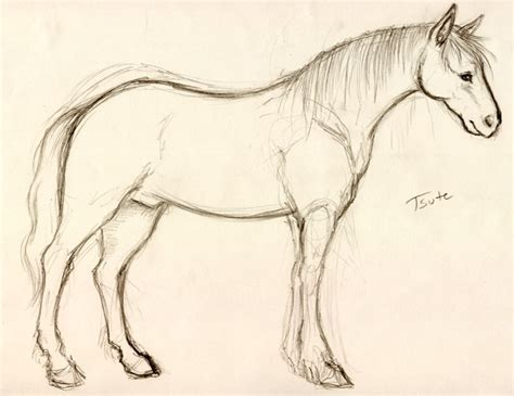 Sketches Horses by Sketch