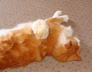 Kandang Kucing Cilacap persahabatan snowy kucing dan gladys anak ayam