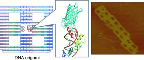 Dna Origami - zinc finger proteins for site specific protein positioning