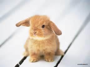 bunny unique wallpaper