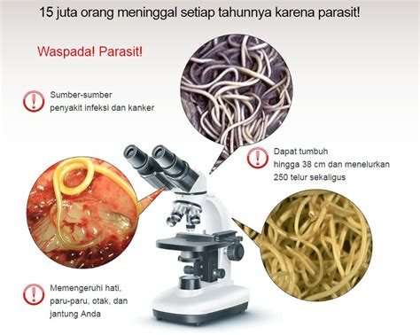 Hermuno Hendel Intoxic Anti Parasit Cacing Perut hermuno intoxic amanah shop