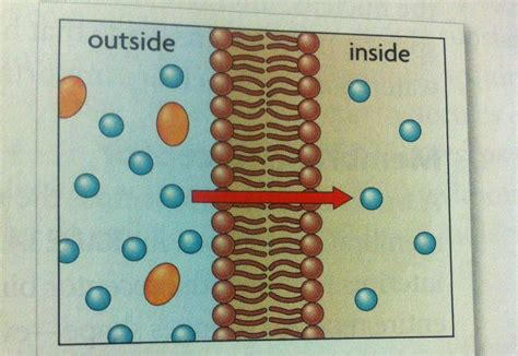 biology  harvey flashcards ch  campbell biology