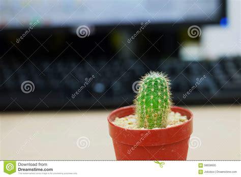 cactus  office table stock image image  botanic