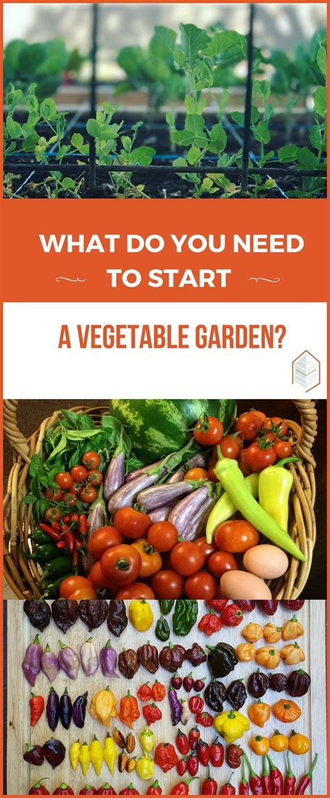 What Do You Need To Start A Vegetable Garden 176864 Best Gardening And Landscape Images On Pinterest