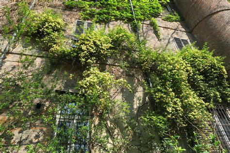 giardino botanico brera orto botanico brera giardini in viaggio