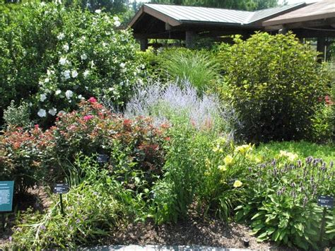 backyard bushes backyard bushes landscaping plants choosing the correct