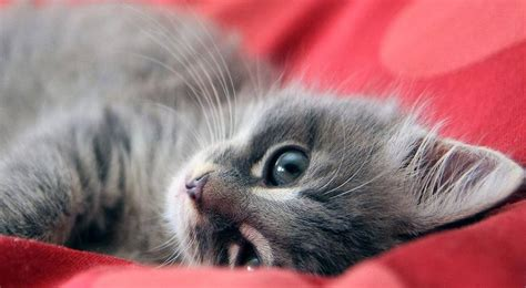 alimentazione gatto cucciolo i vermi gatto prevenirli e curarli