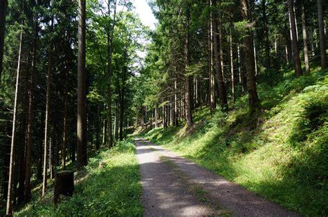 zwarte wandlen oberharmersbach zwarte woud khbrm
