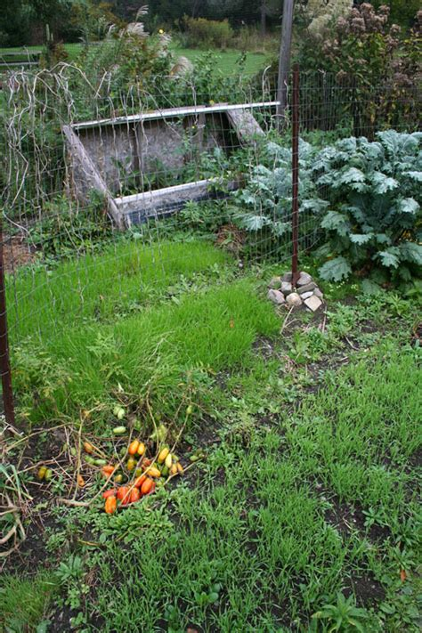 Cover Crops In The Veggie Garden Ellis Hollow Winter Cover Crops For Vegetable Gardens