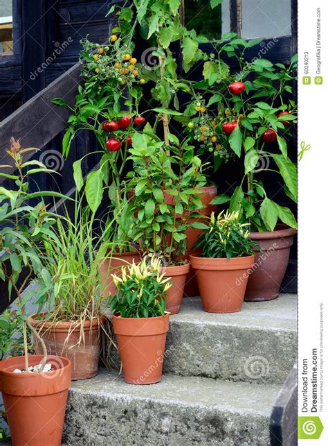 container garden vegetables plants in pot stock image