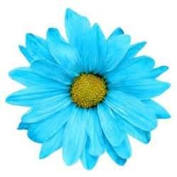 something blue daisy pretty renewing ur wedding wows pinterest