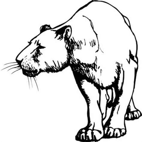 real lion coloring pages moose coloring pages realistic moose coloring pages kids