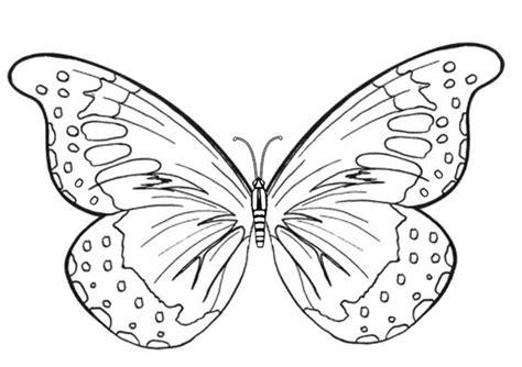 printable butterfly coloring pages coloring me