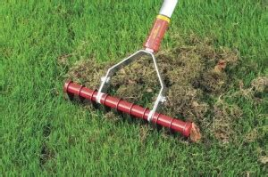 Erst Rasen Mähen Dann Vertikutieren by Wie Oft Vertikutieren Rasen Vertikutieren