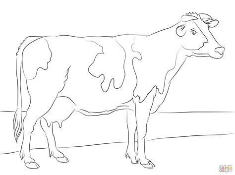 dairy cow coloring page cow coloring pages for adults cute clip art cows grig3 org
