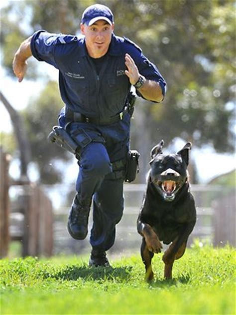 what types of rottweilers are there rottweiler guard