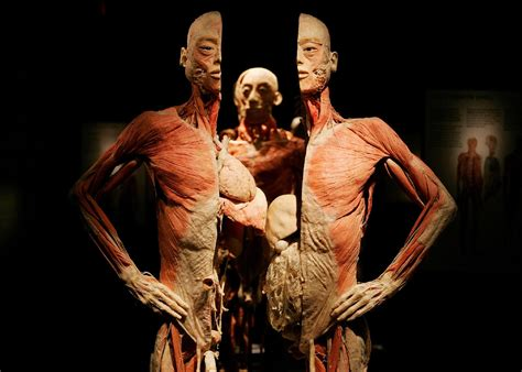 the human body facts and information about the human body