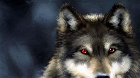 imagenes hd lobos lobos 1920x1080 fondos de pantalla y wallpapers