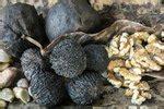 How To Hull Black Walnuts Ehow