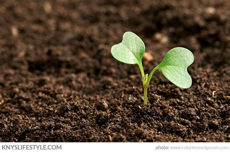 sowing seeds quotes like success
