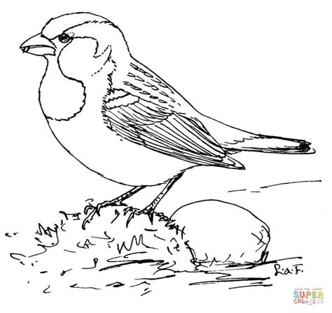 Coloring Page Of House Sparrow | ausmalbild haussperling ausmalbilder kostenlos zum