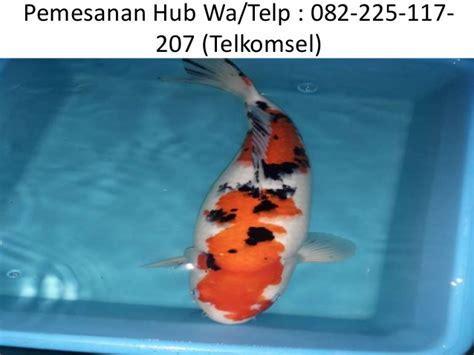 Jual Bibit Ikan Koi Di Wonosobo jual ikan koi di wonosobo hub 082 225 117 207 telkomsel