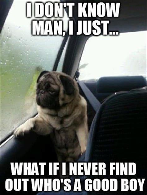 Pugs Meme - pug dog meme dump a day