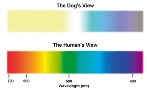 can cats see color why can t dogs and cats see colour quora