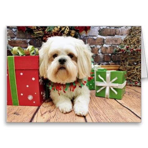 images  dog photo christmas cards  pinterest dalmatian dogs merry christmas