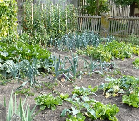 keep pests out of garden keeping bugs out of the garden naturally