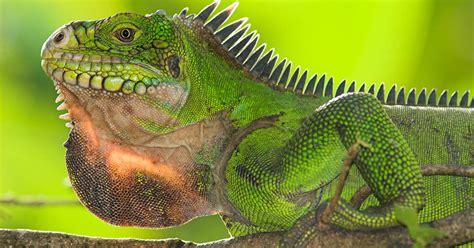 popular reptile names  boy  girl