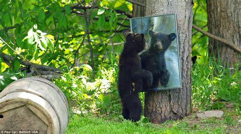 bear in backyard paul cyr photographer leaves props for family of black
