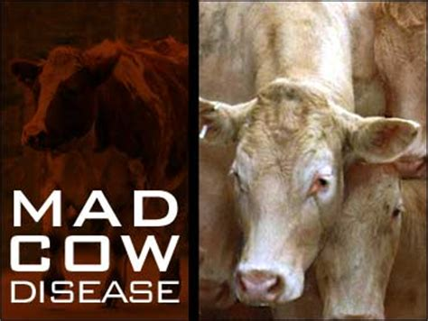 Mad Cow Disease Meme - my mother died from mad cow disease in the us in 1986