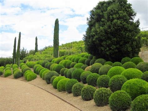 houston topiary tips the best plants to create garden masterpieces