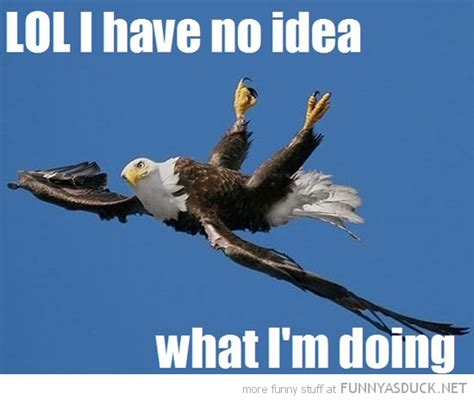 Funny Eagles Meme - funny quotes about eagles quotesgram