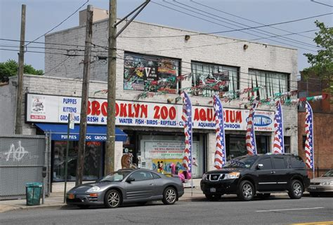 aquarium store in brooklyn to world class aquarium