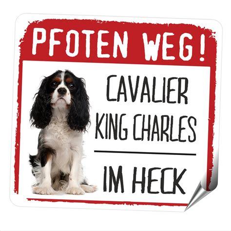 Cing Aufkleber Ebay by Auto Aufkleber Reflective Cavalier King Charles Spaniel
