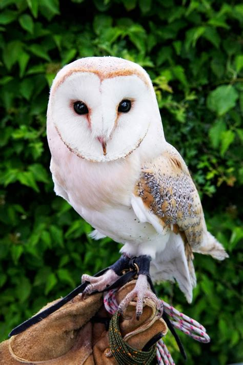 hundreds of pet owls abandoned after harry potter craze